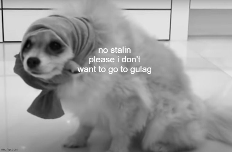 Babushka Dog |  no stalin please i don't want to go to gulag | image tagged in babushka dog,ussr,communism,gulag,russia | made w/ Imgflip meme maker