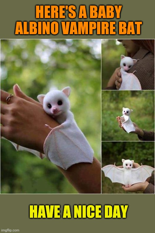 Cute Bat |  HERE'S A BABY ALBINO VAMPIRE BAT; HAVE A NICE DAY | image tagged in baby,bat,cuteness,adorable,vampire,bats | made w/ Imgflip meme maker