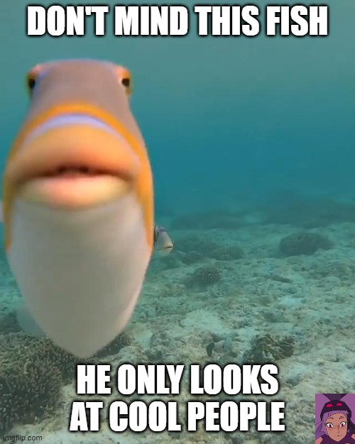 staring fish |  DON'T MIND THIS FISH; HE ONLY LOOKS AT COOL PEOPLE | image tagged in staring fish | made w/ Imgflip meme maker