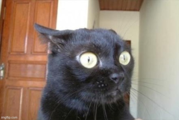 Cannot Be Unseen Cat | image tagged in cannot be unseen cat | made w/ Imgflip meme maker