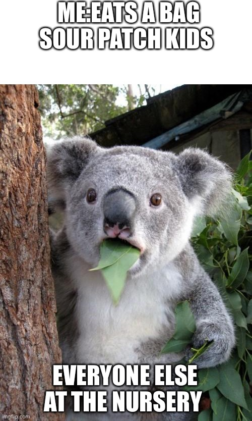 Surprised Koala |  ME:EATS A BAG SOUR PATCH KIDS; EVERYONE ELSE AT THE NURSERY | image tagged in memes,surprised koala | made w/ Imgflip meme maker
