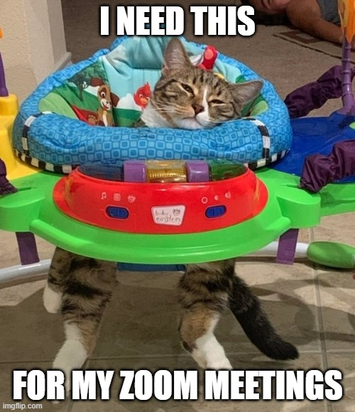 Do they have the adult version? |  I NEED THIS; FOR MY ZOOM MEETINGS | image tagged in funny cats,pandemic,zoom,quarantine,covid-19,coronavirus | made w/ Imgflip meme maker