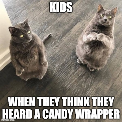 Even from two houses away with a loud TV going  LOL |  KIDS; WHEN THEY THINK THEY HEARD A CANDY WRAPPER | image tagged in funny,cats,kids,parenting,snacks | made w/ Imgflip meme maker