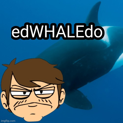 edWHALEdo | image tagged in meme,eddsworld,whale | made w/ Imgflip meme maker