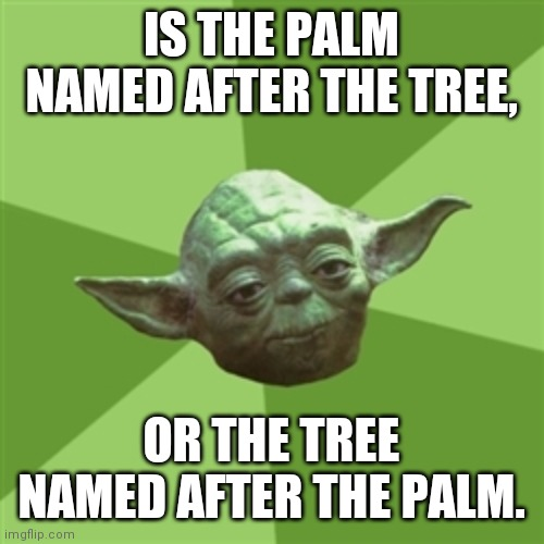 Advice Yoda |  IS THE PALM NAMED AFTER THE TREE, OR THE TREE NAMED AFTER THE PALM. | image tagged in memes,advice yoda | made w/ Imgflip meme maker