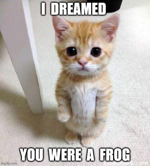 Cute Cat |  I  DREAMED; YOU  WERE  A  FROG | image tagged in memes,cute cat | made w/ Imgflip meme maker