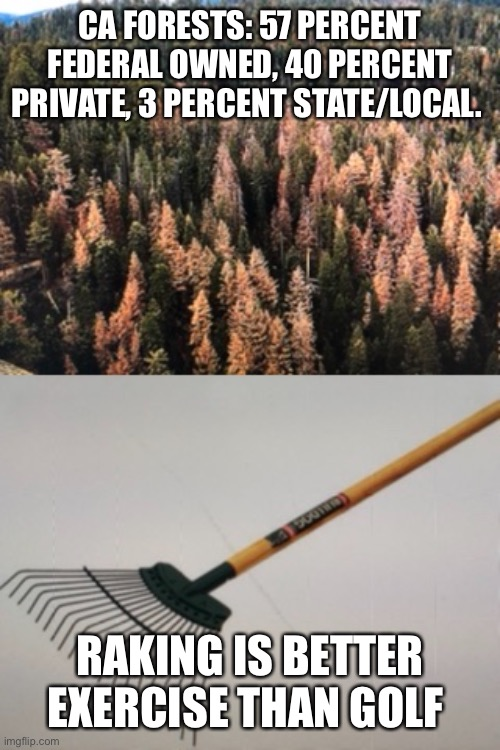 CA FORESTS: 57 PERCENT FEDERAL OWNED, 40 PERCENT PRIVATE, 3 PERCENT STATE/LOCAL. RAKING IS BETTER EXERCISE THAN GOLF | image tagged in nature,mother nature,forest | made w/ Imgflip meme maker