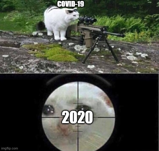 Covid-19 |  COVID-19; 2020 | image tagged in sniper cat | made w/ Imgflip meme maker