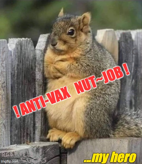 frustrated squirrel |  ! ANTI-VAX   NUT~JOB ! ...my hero | image tagged in frustrated squirrel | made w/ Imgflip meme maker