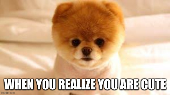 cute |  WHEN YOU REALIZE YOU ARE CUTE | image tagged in puppies | made w/ Imgflip meme maker