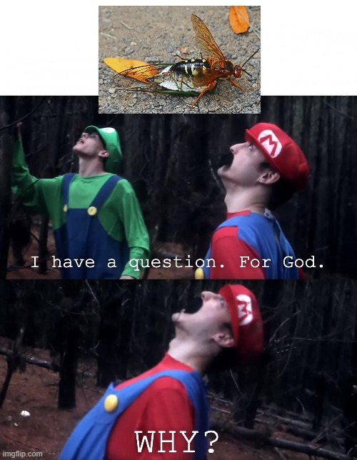 I have a question. For God | image tagged in i have a question for god | made w/ Imgflip meme maker