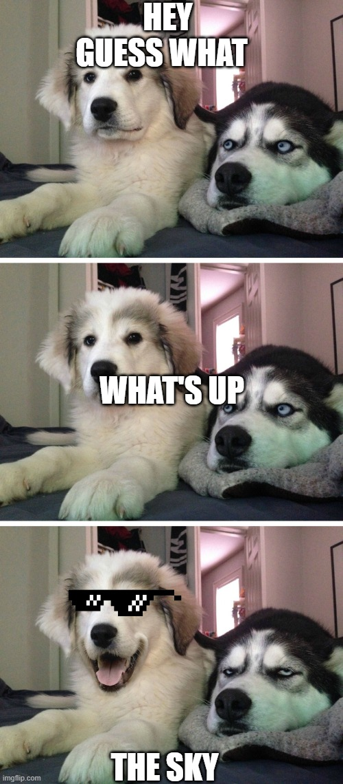 Bad pun dogs |  HEY GUESS WHAT; WHAT'S UP; THE SKY | image tagged in bad pun dogs | made w/ Imgflip meme maker