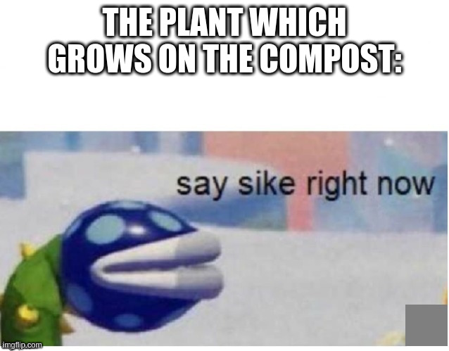 say sike right now | THE PLANT WHICH GROWS ON THE COMPOST: | image tagged in say sike right now | made w/ Imgflip meme maker