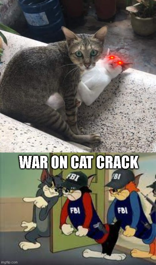 WAR ON CAT CRACK | image tagged in catnip,cat | made w/ Imgflip meme maker