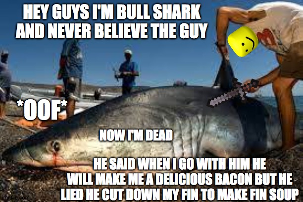 SHARK FIN DOWN |  HEY GUYS I'M BULL SHARK AND NEVER BELIEVE THE GUY; *OOF*; NOW I'M DEAD; HE SAID WHEN I GO WITH HIM HE WILL MAKE ME A DELICIOUS BACON BUT HE LIED HE CUT DOWN MY FIN TO MAKE FIN SOUP | image tagged in shark week | made w/ Imgflip meme maker