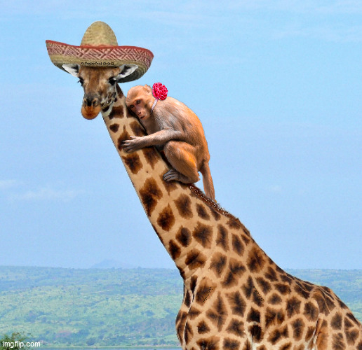 image tagged in animals,giraffe,monkey,sombrero,mexican hat,africa | made w/ Imgflip meme maker