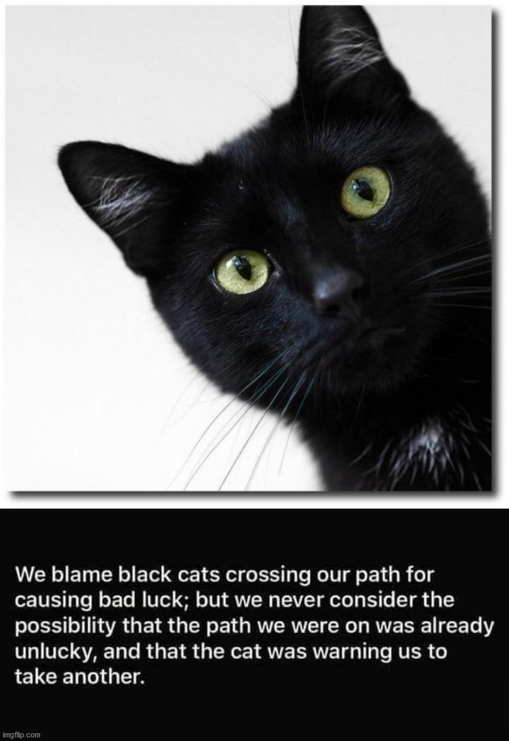 Maybe not so bad. | image tagged in black cat | made w/ Imgflip meme maker