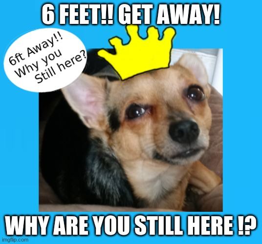 Dog Memes 6ft Away |  6 FEET!! GET AWAY! WHY ARE YOU STILL HERE !? | image tagged in dog meme | made w/ Imgflip meme maker
