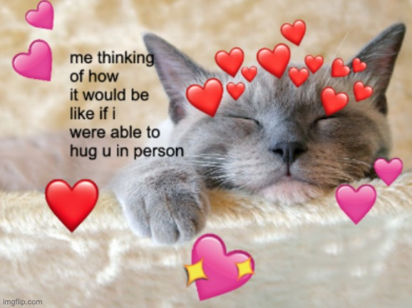 cot | image tagged in cats,cat,wholesome | made w/ Imgflip meme maker