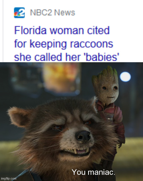 image tagged in memes,funny,florida man,news,raccoon,marvel | made w/ Imgflip meme maker