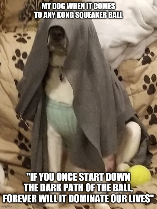 "Darkside Dog |  MY DOG WHEN IT COMES TO ANY KONG SQUEAKER BALL; ""IF YOU ONCE START DOWN THE DARK PATH OF THE BALL, FOREVER WILL IT DOMINATE OUR LIVES"" 