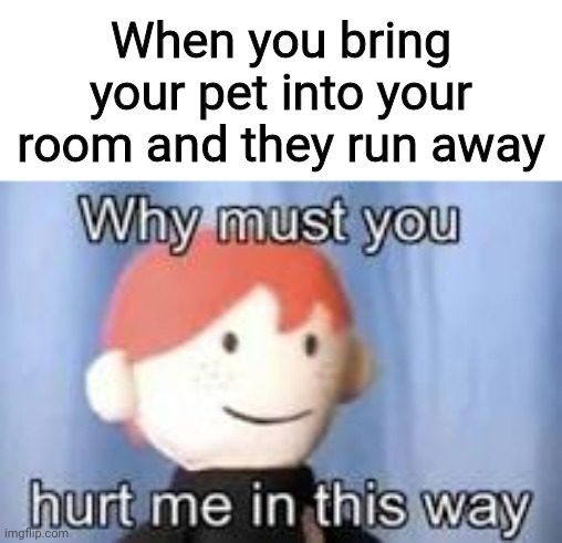 Why? |  When you bring your pet into your room and they run away | image tagged in why must you hurt me in this way | made w/ Imgflip meme maker