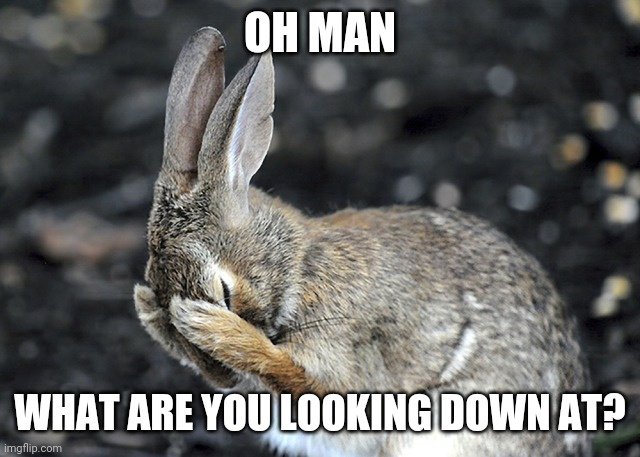 OH MAN WHAT ARE YOU LOOKING DOWN AT? | image tagged in bunny hides | made w/ Imgflip meme maker