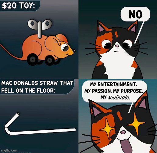 Cats are like little kids who love the box and not the toy. | image tagged in cats | made w/ Imgflip meme maker