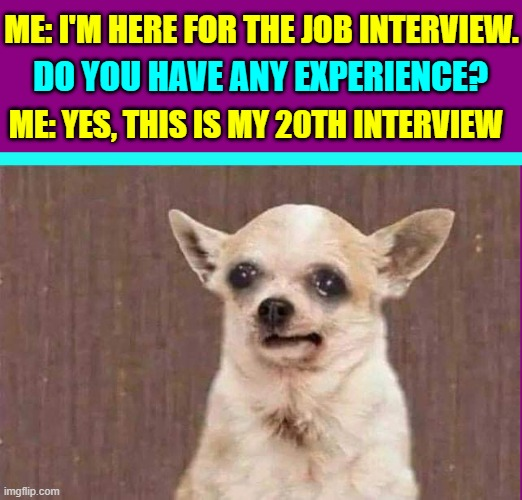 Actually, I like Getting the Unemployment Checks! |  ME: I'M HERE FOR THE JOB INTERVIEW. DO YOU HAVE ANY EXPERIENCE? ME: YES, THIS IS MY 20TH INTERVIEW | image tagged in vince vance,chihuahua,dogs,memes,job interview,funny animals | made w/ Imgflip meme maker