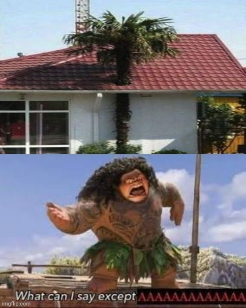 Cursed construction: Palm tree and house | image tagged in what can i say except aaaaaaaaaaa,funny,memes,you had one job,tree,house | made w/ Imgflip meme maker