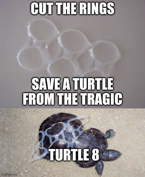 save the turtles |  CUT THE RINGS; SAVE A TURTLE FROM THE TRAGIC; TURTLE 8 | image tagged in turtle | made w/ Imgflip meme maker