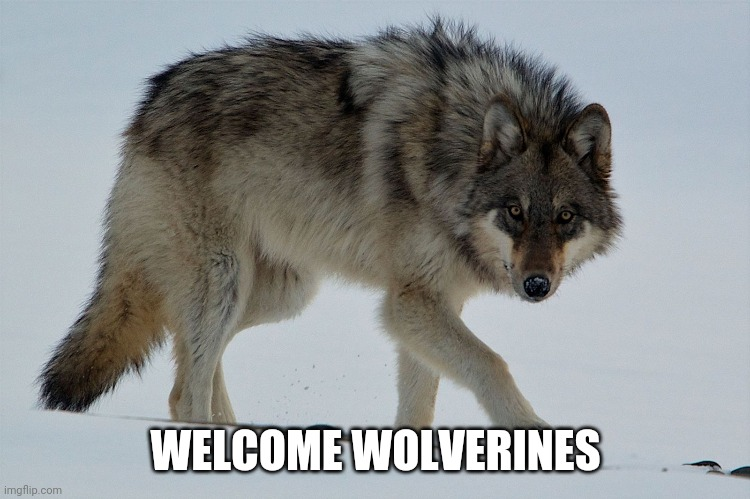 WELCOME WOLVERINES | image tagged in wolves | made w/ Imgflip meme maker