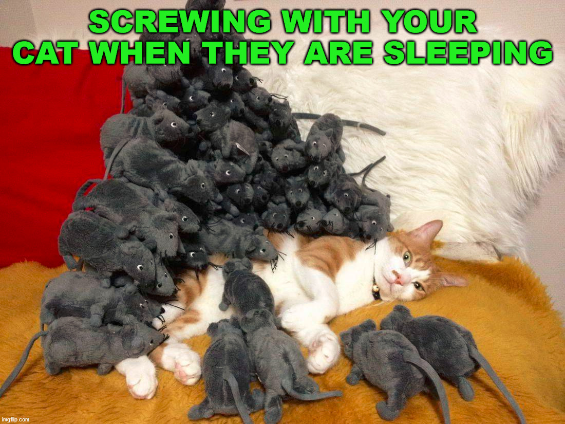 SCREWING WITH YOUR CAT WHEN THEY ARE SLEEPING | image tagged in cats | made w/ Imgflip meme maker