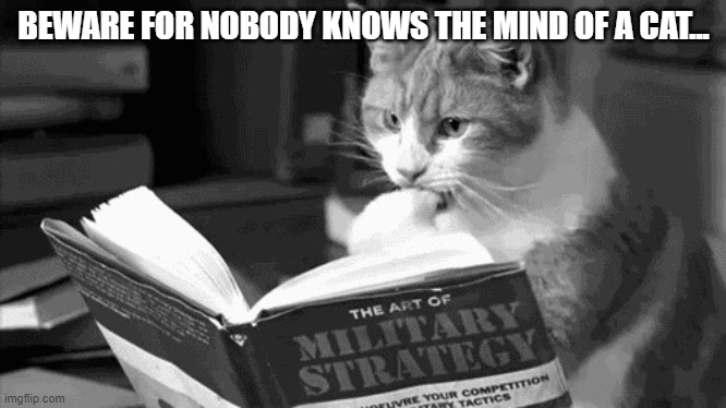 BEWARE FOR NOBODY KNOWS THE MIND OF A CAT... | image tagged in military cat,memes | made w/ Imgflip meme maker