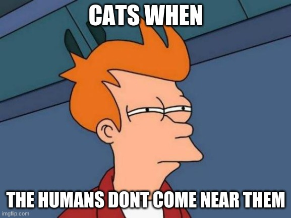 Futurama Fry |  CATS WHEN; THE HUMANS DONT COME NEAR THEM | image tagged in memes,futurama fry,cats | made w/ Imgflip meme maker