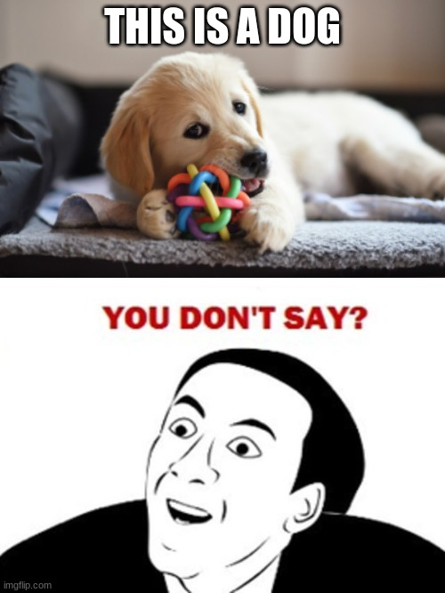 you dont say... |  THIS IS A DOG | image tagged in you dont say,nicholas cage,dog,puppy | made w/ Imgflip meme maker