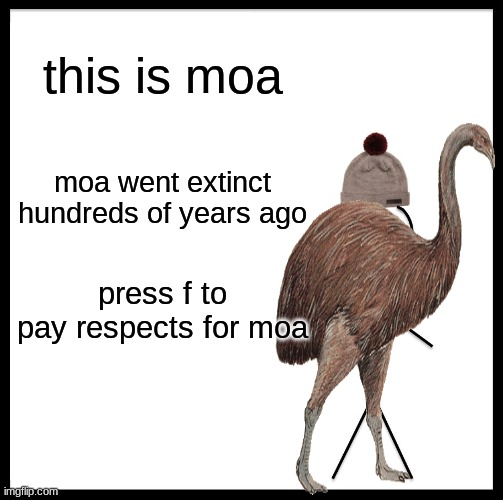 Be Like Bill |  this is moa; moa went extinct hundreds of years ago; press f to pay respects for moa | image tagged in memes,be like bill | made w/ Imgflip meme maker