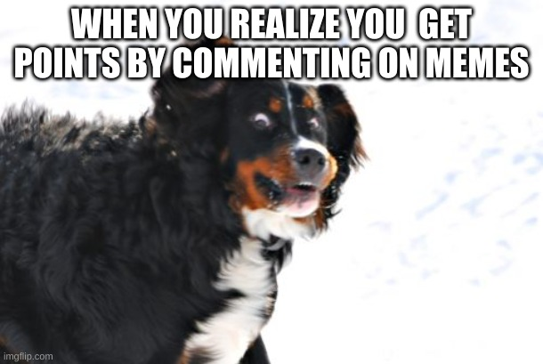 uybuyuytowbir |  WHEN YOU REALIZE YOU  GET POINTS BY COMMENTING ON MEMES | image tagged in memes,crazy dawg | made w/ Imgflip meme maker