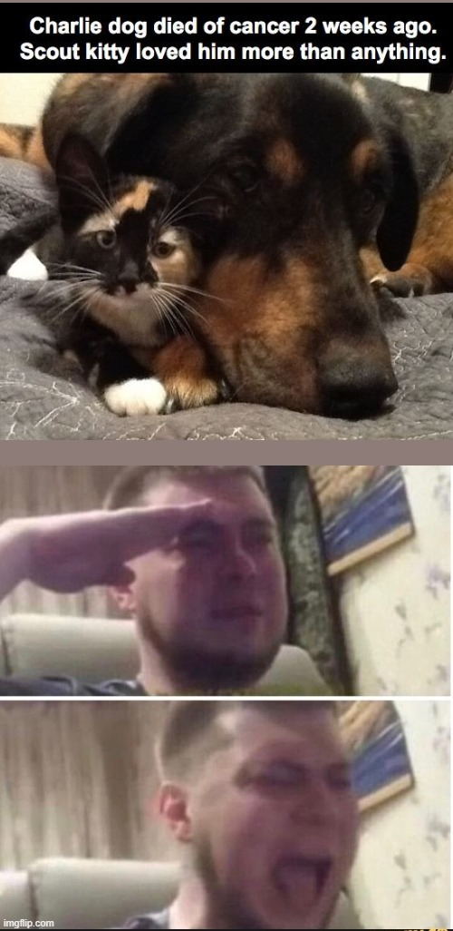Respect for these pets | image tagged in crying salute,press f to pay respects | made w/ Imgflip meme maker