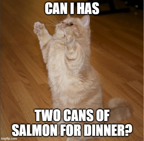 Can I Has - Cat standing |  CAN I HAS; TWO CANS OF SALMON FOR DINNER? | image tagged in can i has - cat standing,memes,cats,meme,funny,cat memes | made w/ Imgflip meme maker