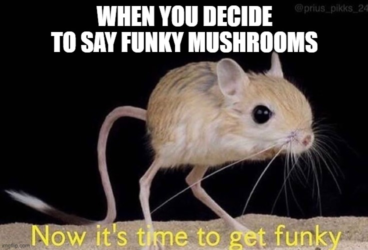 Now it's time to get funky |  WHEN YOU DECIDE TO SAY FUNKY MUSHROOMS | image tagged in now it s time to get funky | made w/ Imgflip meme maker