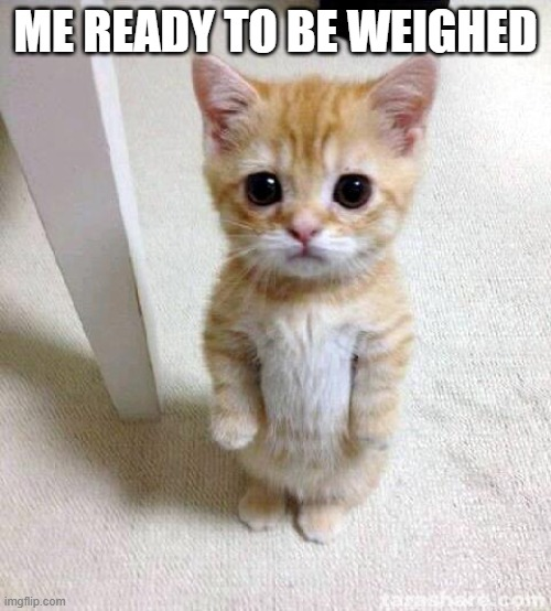 Cute Cat |  ME READY TO BE WEIGHED | image tagged in memes,cute cat | made w/ Imgflip meme maker