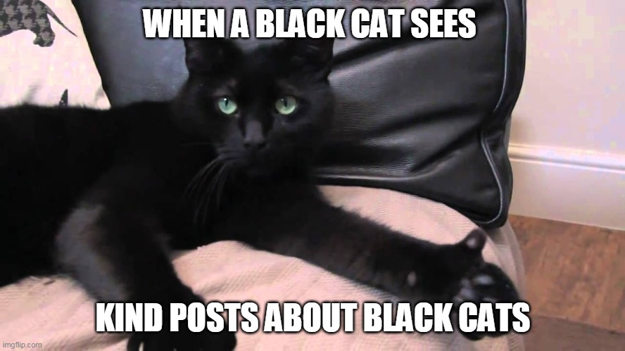 Black cat approval |  WHEN A BLACK CAT SEES; KIND POSTS ABOUT BLACK CATS | image tagged in thumbs up cat,memes,black cat | made w/ Imgflip meme maker