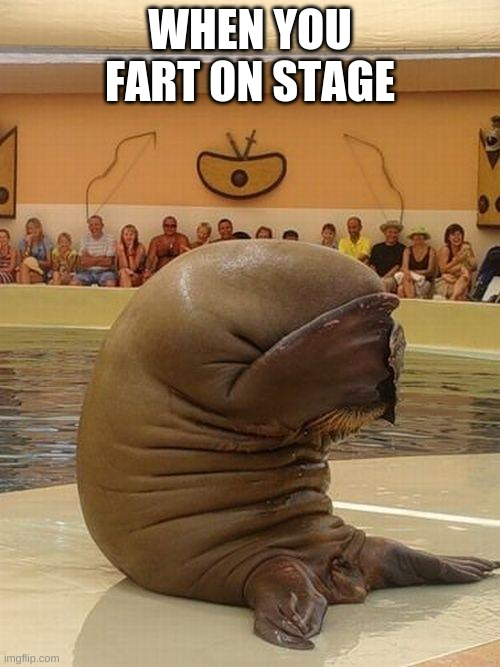 Guilty Walrus |  WHEN YOU FART ON STAGE | image tagged in guilty walrus | made w/ Imgflip meme maker
