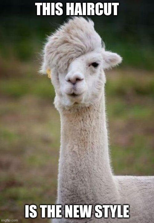 THIS HAIRCUT; IS THE NEW STYLE | image tagged in emo alpaca | made w/ Imgflip meme maker