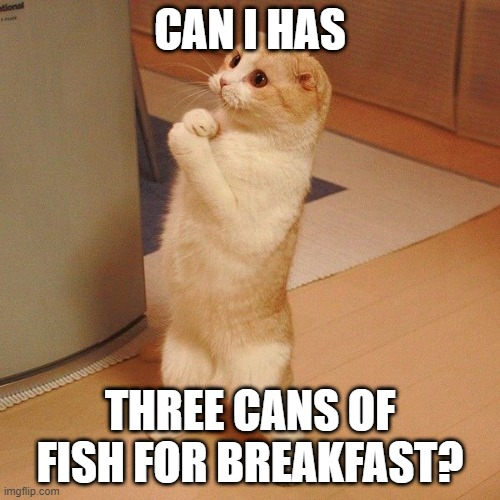 pleaz moar cat |  CAN I HAS; THREE CANS OF FISH FOR BREAKFAST? | image tagged in pleaz moar cat,cats,memes,cat meme,funny,cat memes | made w/ Imgflip meme maker