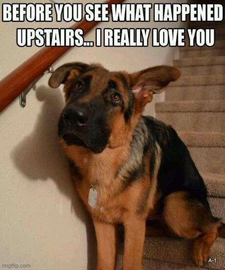 Dog has made a mess upstairs | image tagged in dogs,dog,dog memes,funny dog memes,memes | made w/ Imgflip meme maker