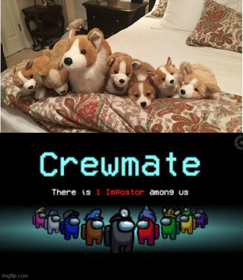 Adorable | image tagged in there is 1 imposter among us,corgi | made w/ Imgflip meme maker