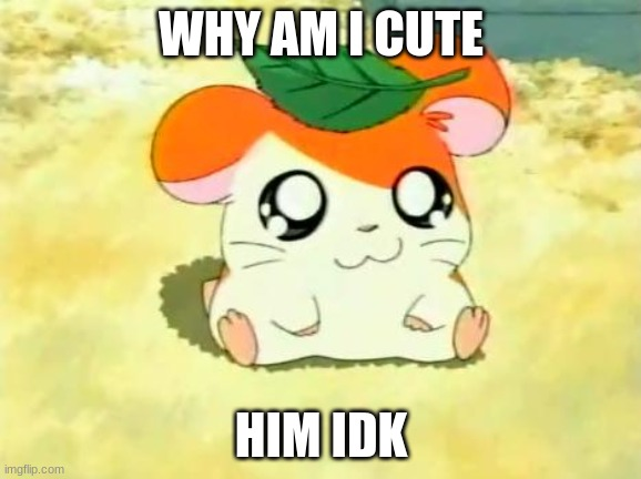 Hamtaro |  WHY AM I CUTE; HIM IDK | image tagged in memes,hamtaro | made w/ Imgflip meme maker