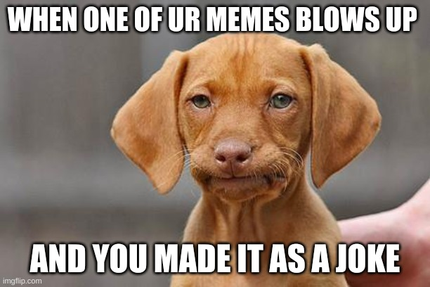 Dissapointed puppy |  WHEN ONE OF UR MEMES BLOWS UP; AND YOU MADE IT AS A JOKE | image tagged in dissapointed puppy | made w/ Imgflip meme maker